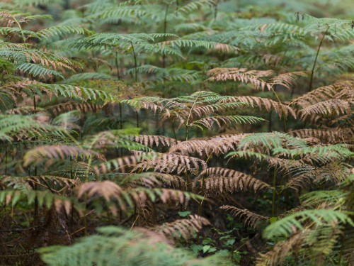 Fern plants in forest by Assaf Frank