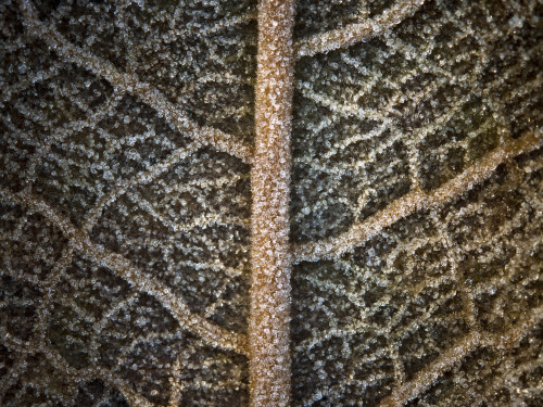 Autumn leaves with frost extreme close-up full frame by Assaf Frank