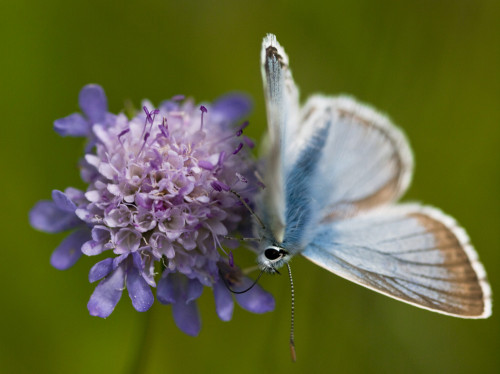 Butterfly on a Flower by Assaf Frank