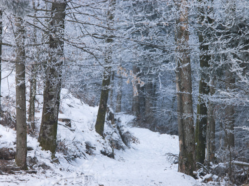 Forest path with snow by Assaf Frank