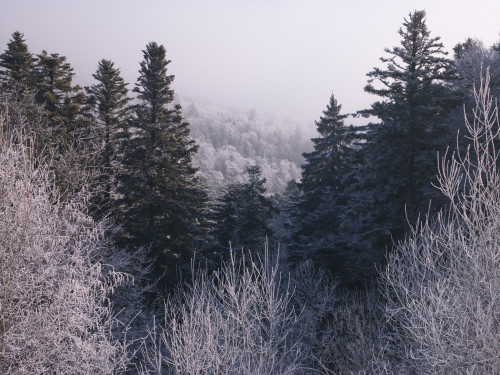 forest tree tops covered in snow by Assaf Frank
