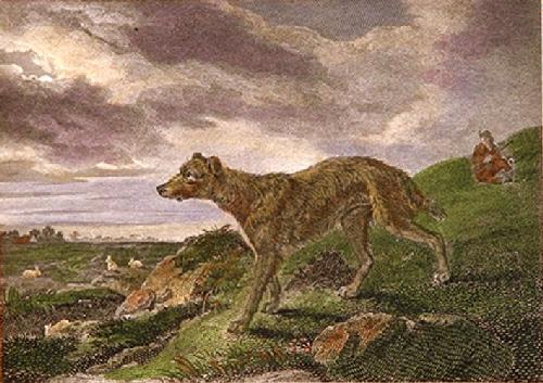 Lurcher (Restrike Etching) by Philip Reinagle