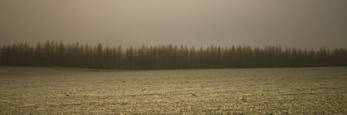 Row of trees in the mist by Assaf Frank