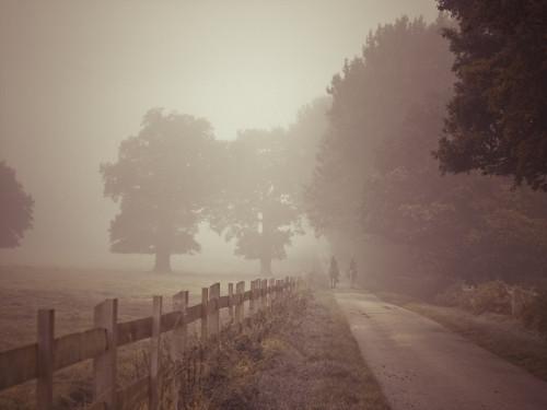 Road at mist by Assaf Frank