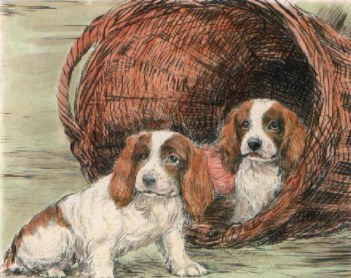 Two Pups in Basket (Restrike Etching) by Ward Binks