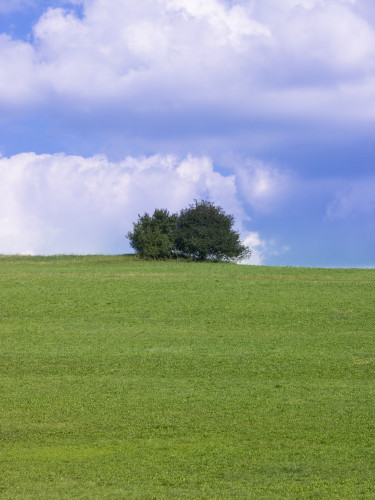 Tree on hill against blue skies by Assaf Frank