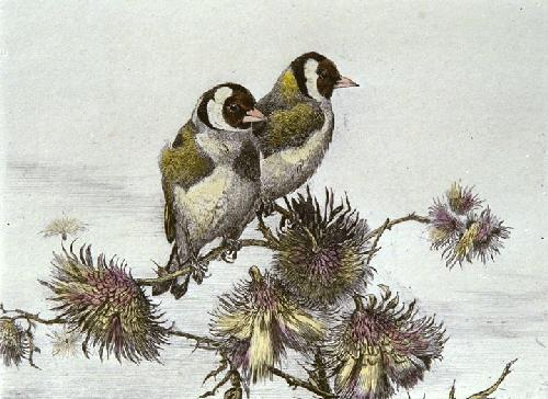 Gold Finches (Restrike Etching) by Winifred Austen