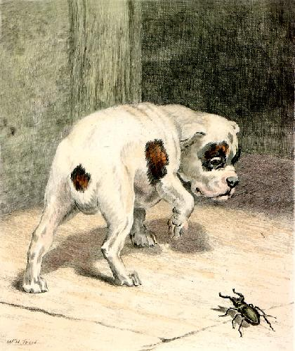 More Frightened Than Hurt (Restrike Etching) by William Henry Hamilton Trood