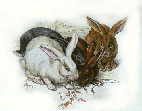 Rabbits (Restrike Etching) by Winifred Austen