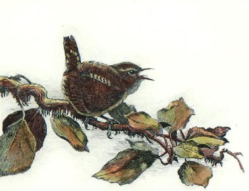 Jenny Wren (Restrike Etching) by Winifred Austen
