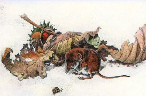 Pigmy Shrew (Restrike Etching) by Winifred Austen
