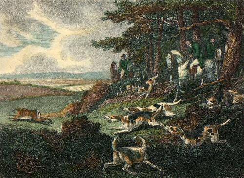 Hare in Sight (Restrike Etching) by Samuel Howitt