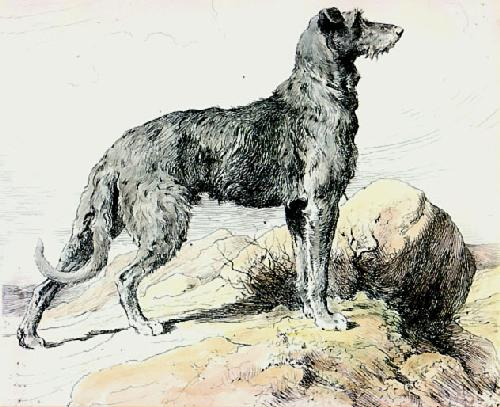 Deerhound (Restrike Etching) by Herbert Thomas Dicksee
