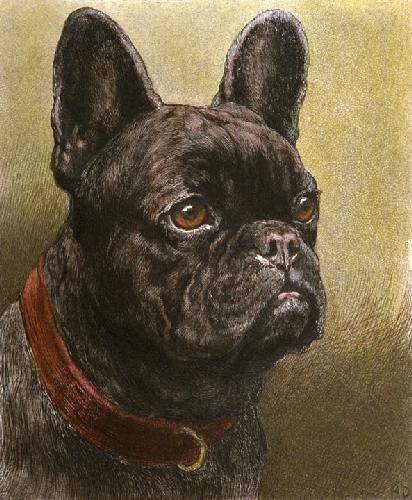 French Bulldog (Restrike Etching) by Herbert Thomas Dicksee