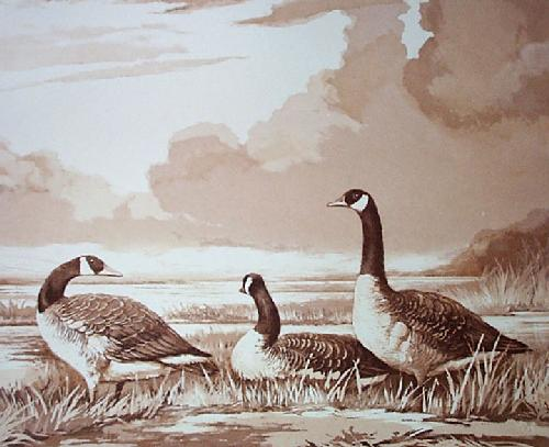 Canada Geese (Restrike Etching) by Ward Binks