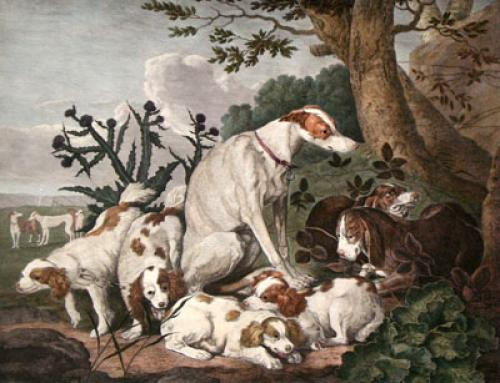 Portrait of Dogs (Restrike Etching) by Jan Fyt