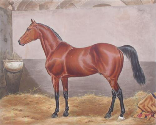 Melton At Stud (Restrike Etching) by Francisca Stuart Sindici