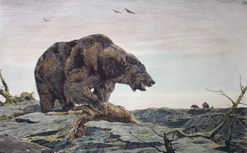 Grizzly Bear (Restrike Etching) by Anonymous