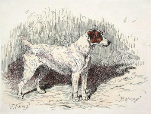 Hound, Briggs (Restrike Etching) by John Emms