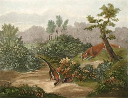 Pheasant in Danger (Restrike Etching) by George Jones