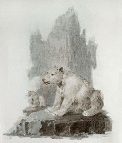 Polar Bear (Restrike Etching) by Julias Caesar Ibbetson