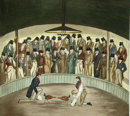 Westminster Cock Pit In 1830 (Restrike Etching) by Henry Alken