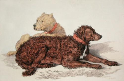 Old Brutus (Dogs) (Restrike Etching) by Sir Edwin Henry Landseer