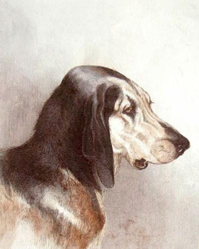 Bloodhound (Restrike Etching) by Charles Hancock