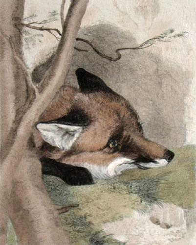 Fox (Restrike Etching) by Charles Hancock