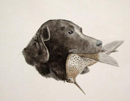 Black Labrador (Restrike Etching) by Anonymous