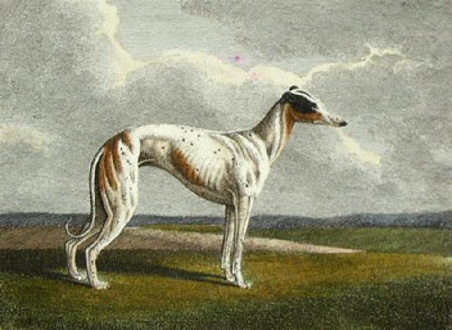 The Greyhound (Restrike Etching) by Samuel Howitt