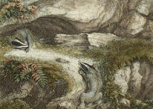 The Badgers (Restrike Etching) by Samuel Howitt