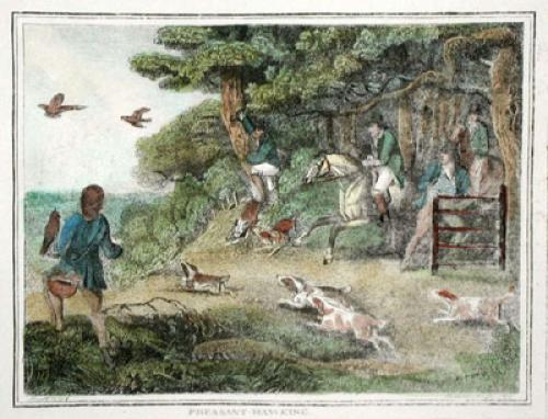 Pheasant Hawking (Restrike Etching) by Samuel Howitt