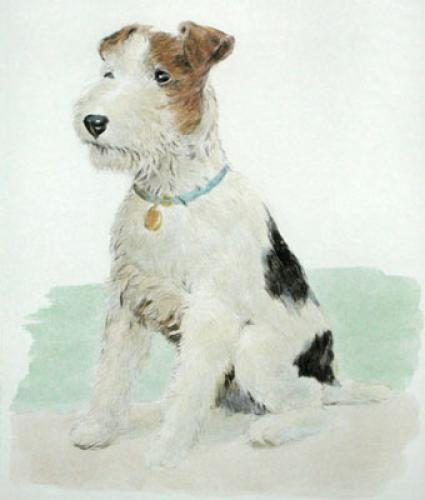 Wire Haired Fox Terrier (Restrike Etching) by Anonymous
