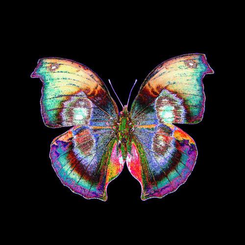 Black Butterfly by Erin Rafferty
