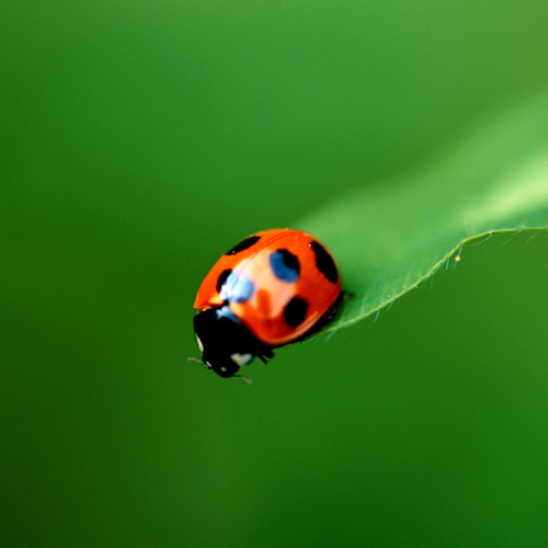 Ladybird by Erin Rafferty