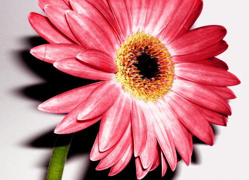 Wild Flower I by Erin Rafferty
