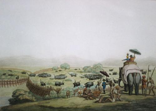 Driving Elephants (Restrike Etching) by Samuel Howitt