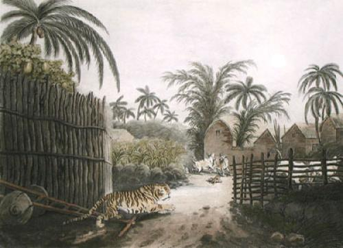 Tiger prowling through village (Restrike Etching) by Samuel Howitt
