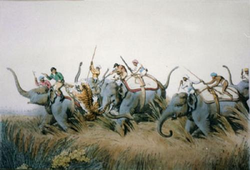 Tiger Springing upon Elephant (Restrike Etching) by Samuel Howitt