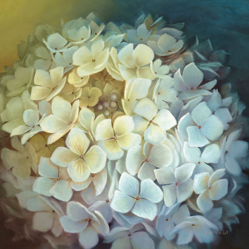 Hydrangea Portrait by Lisa Audit