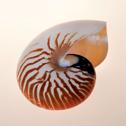 Nautilus by Tom Artin