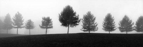 Tree Line by Erin Clark