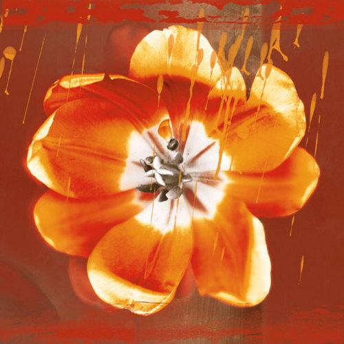 Tulip Fresco (red) by Erin Clark