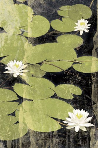 Pond Blossoms by Erin Clark