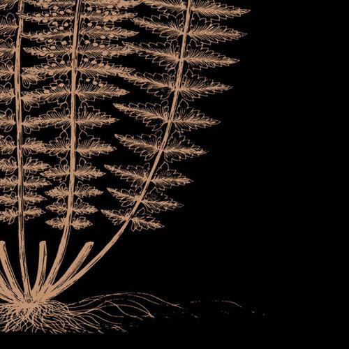 Fern IV (on black) by Botanical Series