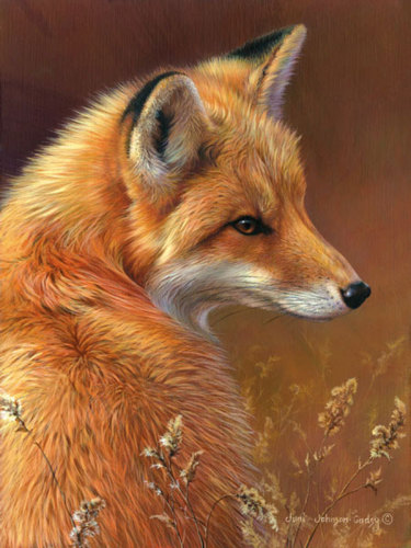 Curious- Red Fox by Johnson-Godsy