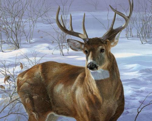 Through My Window- Whitetail Deer by Johnson-Godsy
