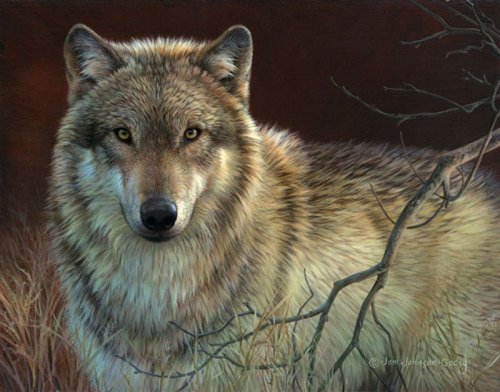 Uninterrupted Stare- Gray Wolf by Johnson-Godsy