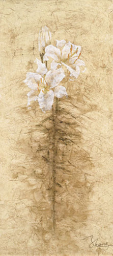 Lily Fair by B.J. Zhang